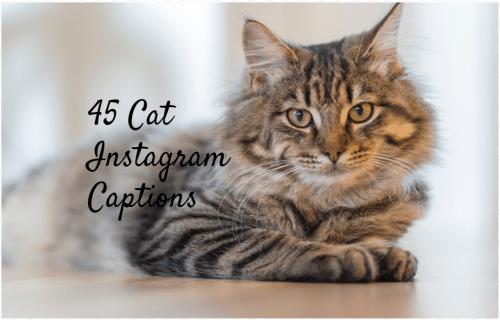 100 титров кошек для Instagram – Мяу