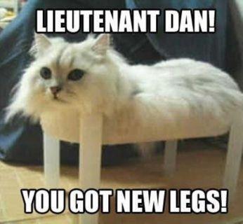 Милые кошки мемы и смешные фото котят