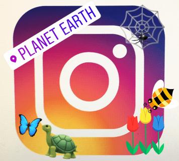 Как добавить стикеры или эмодзи в истории Instagram
