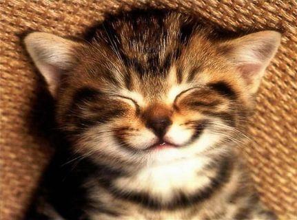 Смешная кошка Gif, чтобы сделать вас счастливыми